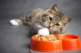 Чем нельзя кормить кошку - важный совет для всех владельцев