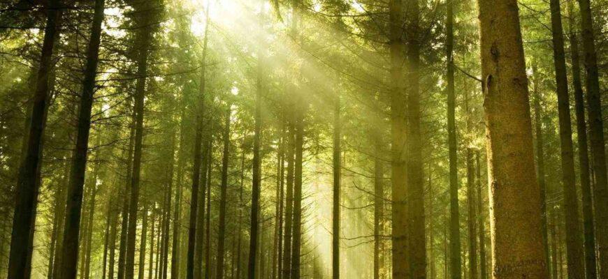 Растения сами производят солнцезащитный крем