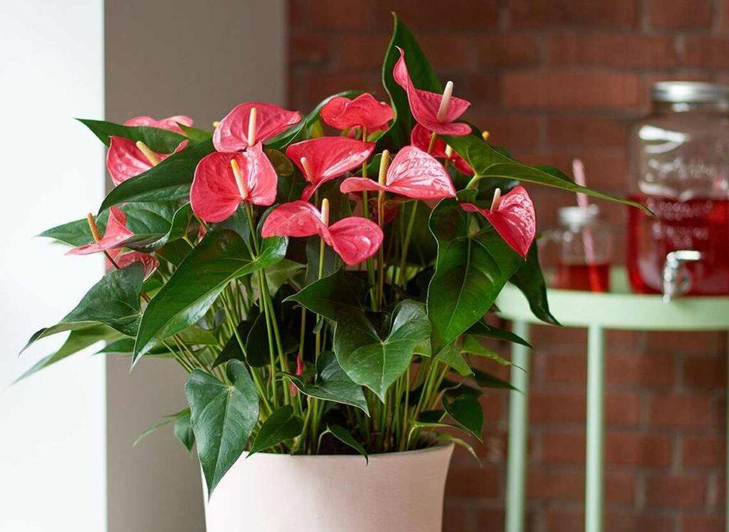 7 растений — которые приносят в дом счастье и богатство